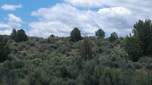 photo of the Sierra High Desert