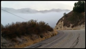 carmel valley rd morning