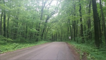canopy of trees on Freedom Road