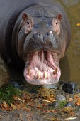 Observation of tongue and pulse are used in diagnosis for veterinary acupuncture as well as human.  Even hippos can be diagnosed this way.  While we do not practice veterinary acupuncture, we can refer you to someone who does.